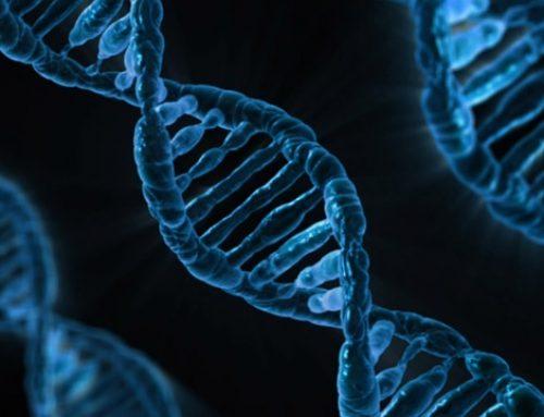 D'Arcy v Myriad Genetics [2015] HCA 35 – Genetic Patents